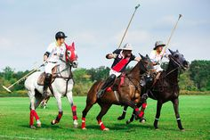 The Monza polo Cup: a great event!