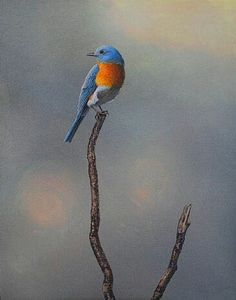 eastern bluebird painting art by raymond easton nature art wildlife art specializing in the birds of north america easton art