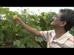 Die neuen Vegetarier - Arte 2012 Food Documentaries, Youtube, Movies, Vegetarian, Youtubers, Youtube Movies