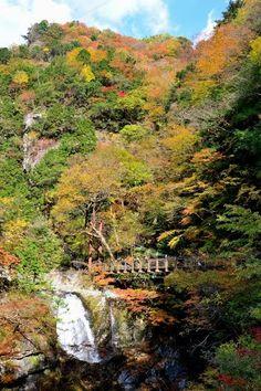 天川村・みたらい渓谷にて (2012/11/7)