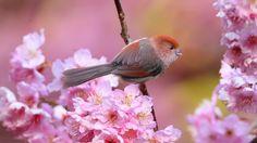 cute little bird in flowers [1920 x 1080]
