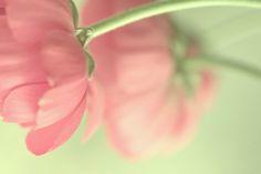 fumi - Fumiko's Photography.