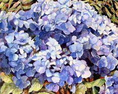 Art of Mary Gibbs Hydrangeas Watercolor Disney, Watercolor Mixing, Watercolor Flowers, Watercolor Paintings, Flower Paintings, Watercolor Ideas, Watercolors, D Flowers, Beautiful Flowers