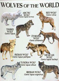 Wolf Types