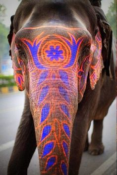 Decorated Indian Elephant at Hindu Festival in India - as a sign of respect for God. Hindus believe God pervades in everything as everything was created by God, hence animals are held sacred in India and are most respected with Hindu art, decorations and paintings. Another reason why majority of Hindus/Indians are vegetarians. 80% of India are vegetarians- अहिंसा - non violence, Hinduism.