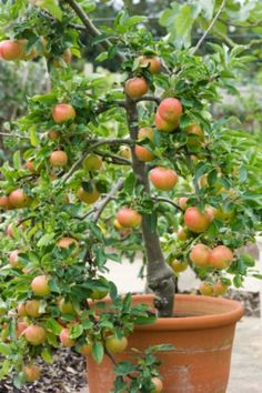 Container Gardening: 5 Easy Foods to Grow