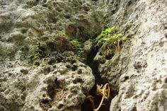 factitious, fake garden rock