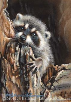 Daydream - Raccoon by rebeccalatham on deviantART