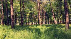 #nature #doğa #tree