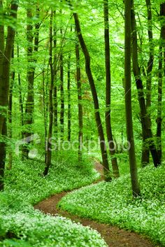 Lush Forest Path Royalty Free Stock Photo