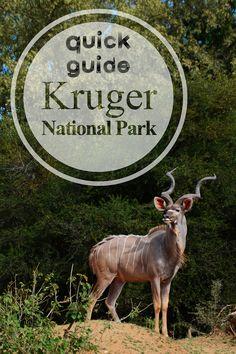 Quick Guide - Kruger National Park  #OrdinaryExtraordinaryNet #OrdinaryExtraordinaryNetTravel #KrugerNationalPark #KNP #SouthAfrica #Africa #Lion #Elephant #Leopard #Buffalo #Rhinoceros #BigFive #BigFiveSouthAfrica #BigFiveAfrica #Shingwedzi #Letaba #Mopani #Satara #Skukuza #Braai #Biltong #Beskuit #Tsessebe #BushBaby #SouthernGroundHornbill #GrounHornbill #Hornbill #Waterhole #SANPArks Biltong, Kruger National Park, Going On Holiday, Rhinoceros, Us Travel, Travel Guides, Wonders Of The World, South Africa, Buffalo