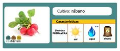 Prueba cultivar rábanos en tu mesa de cultivo! http://ecohortum.com/como-cultivar-rabanos/