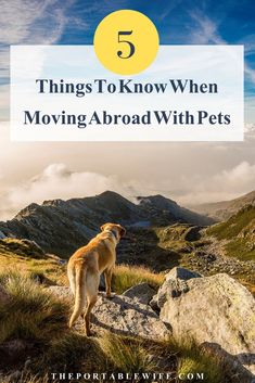 Is moving abroad with pets the right choice for you? Bringing your pet on an international move can be expensive and challenging. Learn what to expect when moving pets overseas with these five things you should know before relocating with pets. Moving To Scotland, Pet Travel, Travel Tips, Work Abroad, Study Abroad, Moving Overseas, Living In Mexico, Moving To Australia, Travel Abroad