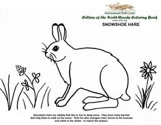 Coloring in The Critters of the North Woods Coloring Book is a great way to learn about the different animals that live in the same northwoods habitat as the Preschool At Home, Preschool Crafts, Crafts For Kids, Snowshoe Hare, Animal Science, Wood Colors, Story Time, Habitats, Color Change