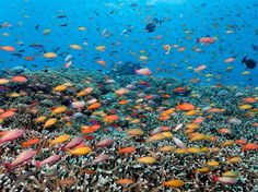 More than 1,500 species of tropical fish can be found in the reef, giving the…