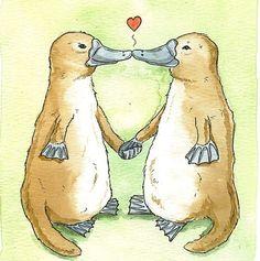 platypus love