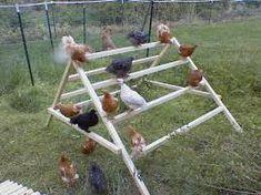 Image result for guinea pig play gym