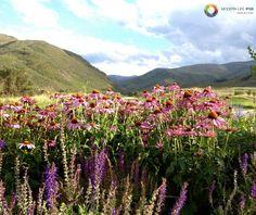 Flowers - Vail (Colorado)
