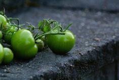 Eingelegte grüne Tomaten Rezept