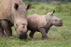Rhino Miracle Baby Spotted 'Smiling' While Out With Mom