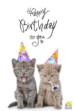 The best Happy Birthday Images - Happy Birthday Funny - Funny Birthday meme - - Happy Birthday image with cute kittens. The post The best Happy Birthday Images appeared first on Gag Dad.