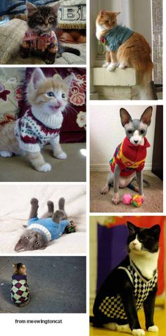 kittens in sweaters from meowingtoncat