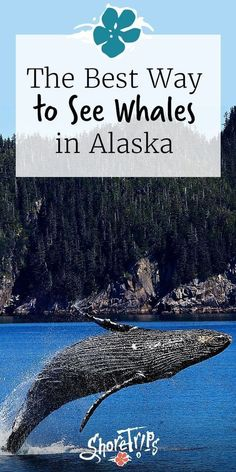 Experience the two best cruises excursions in all of Alaska, together in one tri. Cruise Excursions, Shore Excursions, Cruise Travel, Cruise Vacation, Travel Usa, Family Cruise, Vacation Ideas, Vacations, Whale Watching Boat