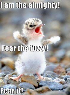 30 Funny animal captions - part 5 (30 pics)   Amazing Creatures