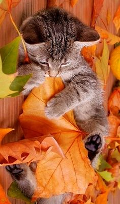 Autumn kitten