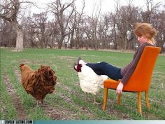 funny real estate - Prop Me Up, Chicken - I want to make one of these Chicken Footstools.  No tutorial, just from Lolcats.com :(