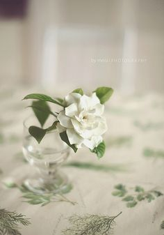 Gardenia, what my grandmother carried at her wedding.