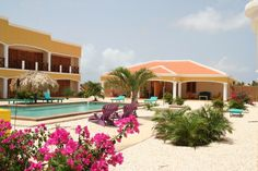 Djambo. Bonaire