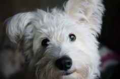 My Fur Baby, Poppy!