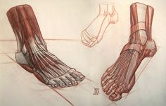 Enjoy a collection of references for Character Design: Feet Anatomy. The collection contains illustrations, sketches, model sheets and tutorials… This Human Anatomy For Artists, Human Anatomy Drawing, Human Figure Drawing, Figure Drawings, Foot Anatomy, Anatomy Study, Gross Anatomy, Anatomy Art, Feet Drawing