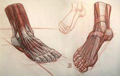 Anatomy Demos via PinCG.com