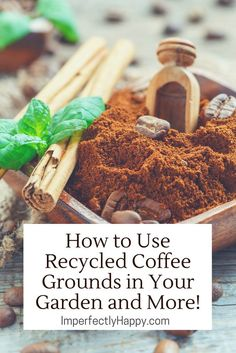 How to Use Recycle Coffee Grounds in Your Garden and More! It isn't just for your compost - homesteaders can use coffee in lots of creative ways!