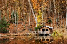 Everybody wants a little cabin in the woods where they can get away…