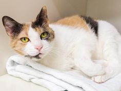 How to Make Your Home Comfortable for a Senior Cat | petMD
