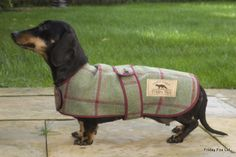 Our Tweed miniature Dachshund coat is made from beautiful Yorkshire Tweed with a rich Burgandy check running through it. The coat's fully lined with soft, golden, Yorkshire moleskin and trimmed in a Burgandy binding. We have designed and cut these coats specifically to suit the miniature Dachschund shape, being longer in the body but a little less deep than a traditional small dog coat. We've also added small elasticated hind leg straps which can used to help keep the coat stable on the ...