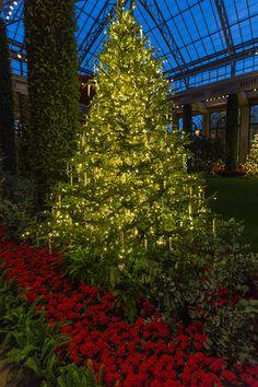Longwood Gardens - The Orangery - Christmas 2015 https://michaelsphotos.smugmug.com/LONGWOOD-GARDENS/LONGWOOD-GARDENS-CHRISTMAS/