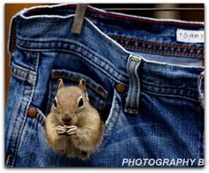 Stripes. It's all in the stripes when comparing a chipmunk to any squirrel. Chipmunks have stripes all the way up and down their little bodies clear to the tip of their noses. Ground squirrels have...