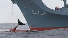 Antigua To Support Japanese Whaling Again