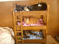 Lol! I want a kitty bunk bed!