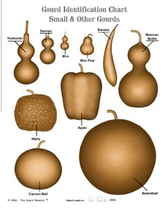 ugar Bowl ( Lagenaria siceraria )   Produces round gourds with flattened tops and bottoms averaging about 8 to 10 inches wide by 4 to 5 inches tall, that are ideal for making bowls or gift baskets, each gourd when divided will make two bowls. Well suited for crafting.