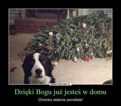 ŚWIĄTECZNE OBRAZKI: Boże Narodzenie z przymrużeniem oka. Memy i demotywatory
