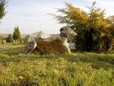 Janka - hungaryan sighthund