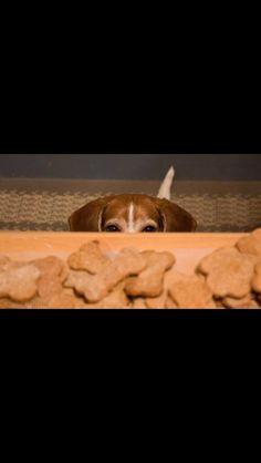 Sneaky beagle.