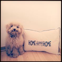 Home Happy Home!  facebook.com/bharanideco Instagram @bharanideco Twitter @bharanideco www.bharani.com.ar