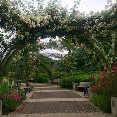Owen Rose Garden Eugene, Oregon