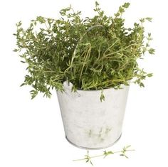 What Herbs Should You Grow Next to Thyme?